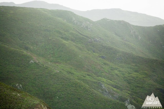 Wet and misty Headlands (photo courtesy of Jesse Ellis, Let's Wander Photography)