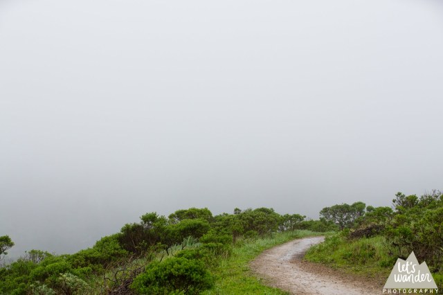 Out into the fog (photo courtesy Jesse Ellis, Let's Wander Photography)